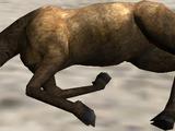 Carcass (2.7)