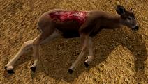 WQ-AE MuleDeerDoe-Carcass-Glorious-Bite1MoreGore-3.0