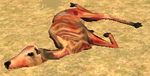 Elkcarcass 4