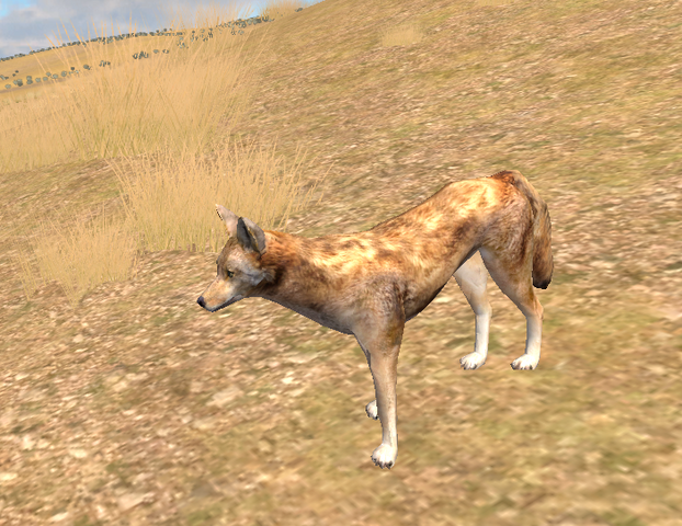 File:Coyote Wolf Quest by Kali caracal.png