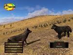 Dispersal wolf bonding (2.7)