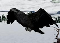 3.0 Raven
