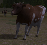 Adult cow cattle ranch inspect (2.7)
