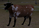 Cattle rance cow calf inspect (2.5)
