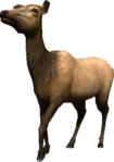 2.7 cow elk idle