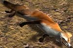 Fox carcass (2.7)