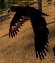 Goldeneagleflying