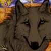 Wqa koabrownwolf