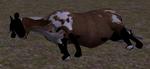 Cattle calf carcass (2.5)