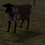 Cattle rance cow calf inspect (2.7)