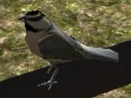 BirdA