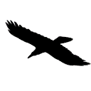 Raven-closeup-graphic