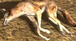 Coyote carcass (2.7)