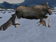 Moose WQ1