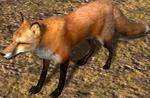 2.7 fox idle