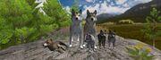 Wolfquest 2.7