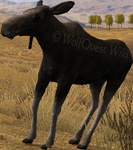 2.7 cowmoose idle