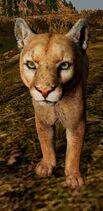 WQ-AE Cougar-3.0