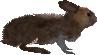 2.7 hare