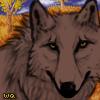 Wqa koaredwolf