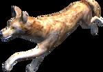 2.7 coyote running