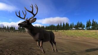 Something New on the WolfQuest Menu Mule Deer!