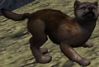 Beige coat pup (2.7)