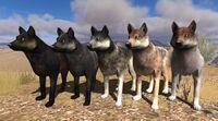 Lamar canyon pack - wolfcoatpack1