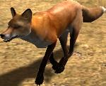 2.7 fox running