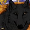 Wqa koablackwolf