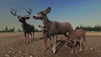A Mule Deer Family