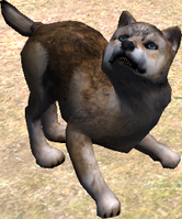 Pup auburn
