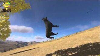 Floating wolf glitch