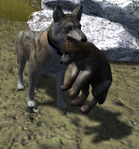 Carrying pup (2.7)