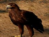 Golden Eagle (3.0)