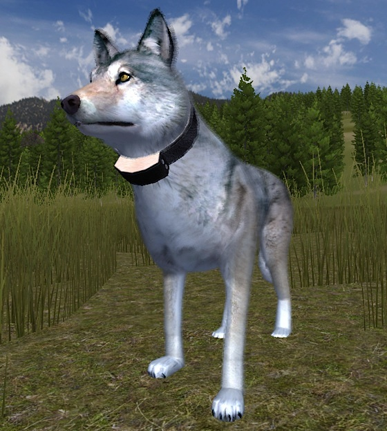 Wolfquest android wolfquest wiki fandom powered by wikia wolf radiocollar ccuart Choice Image