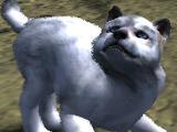 Pure white pup (2.7)