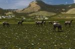 2.7 elk herd