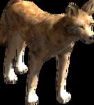 2.7 coyote