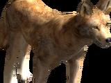 Coyote (2.7)