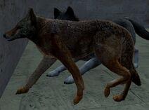WQ-AE Coyote-3.0