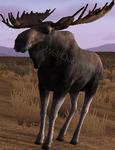 2.7 bullmoose idle