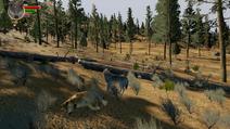 WQ Wolf Carcass