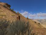 Fossil Forest WQscreenshot-2 (update)