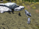 Wolf pups playbow
