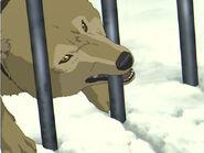 Wolves-in-Anime-wolves-16961844-640-480
