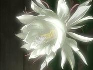 Lunar Flower