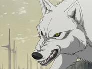 EP01 - Kiba Wolf