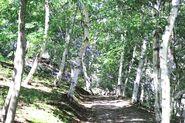 Wolmyeongdong-hiking-trail-1