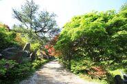 Wolmyeongdong-hiking-trail-5